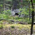 La taniere de l ours
